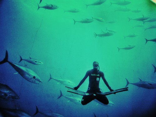 diving with tunas